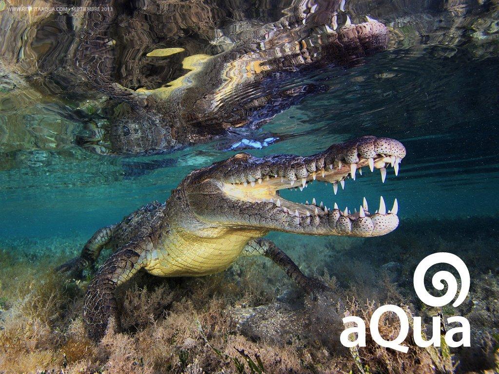 Jardines De La Reina Cuba 50 Dto Revista Aqua