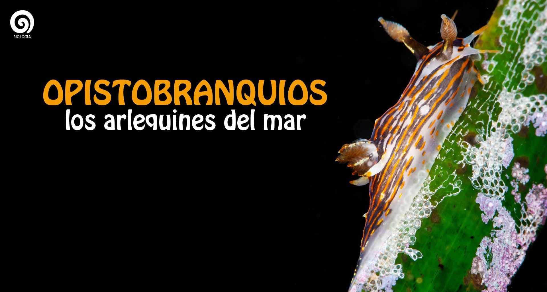 portadas-web-aQua-228