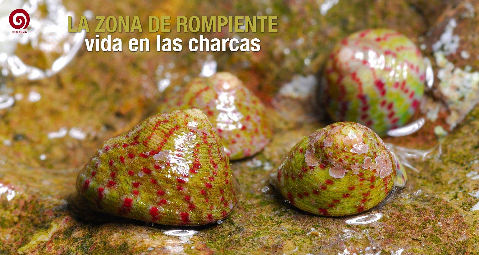 Portadas-web-aQua237