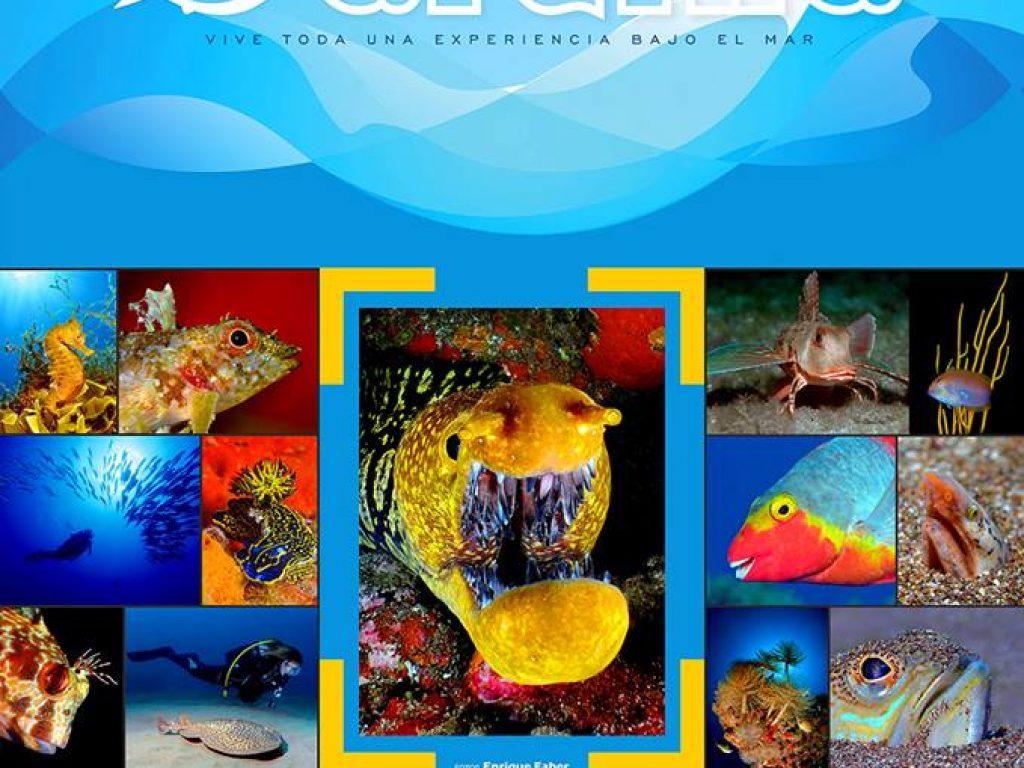 open sardina | revista aQu