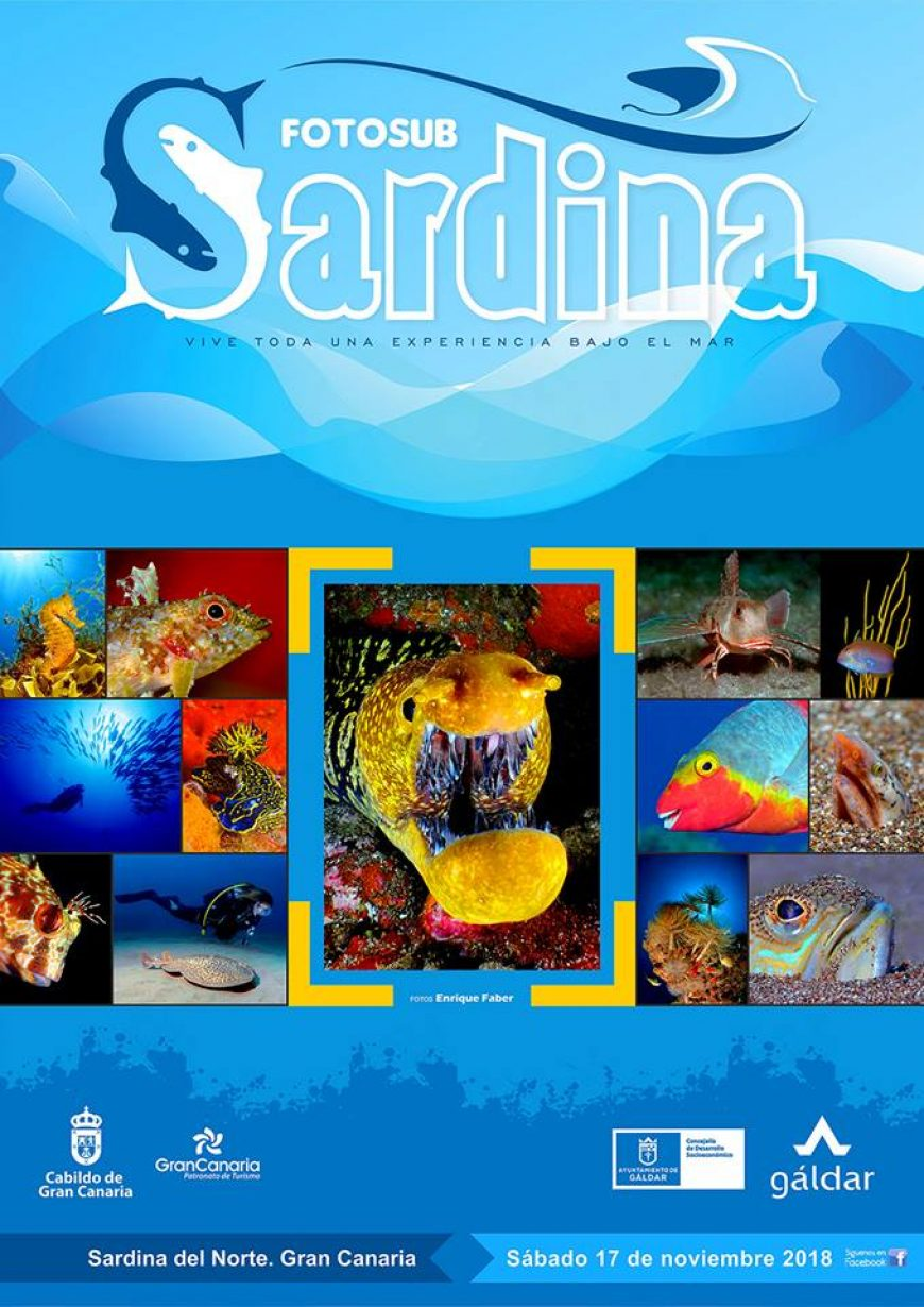 open sardina | revista aQu